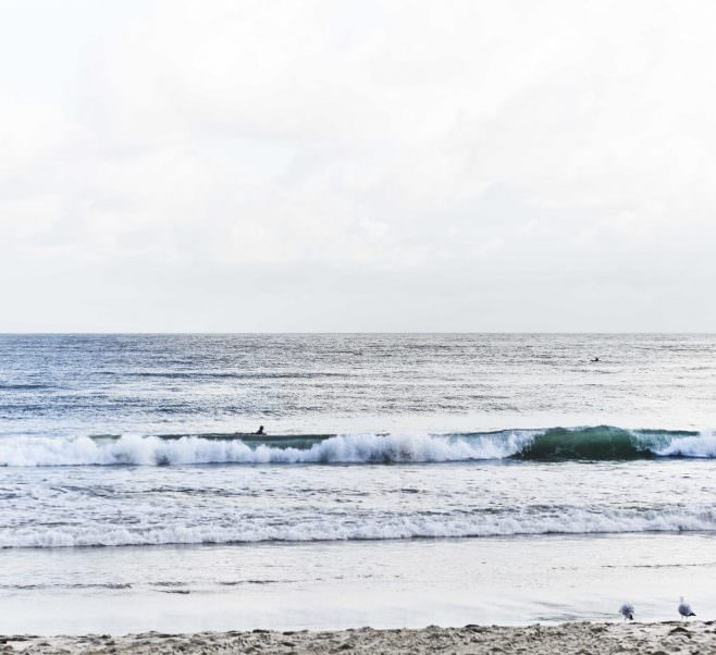 Close up of surfer and seagulls at Noosa Beach near Japara Noosa aged care home