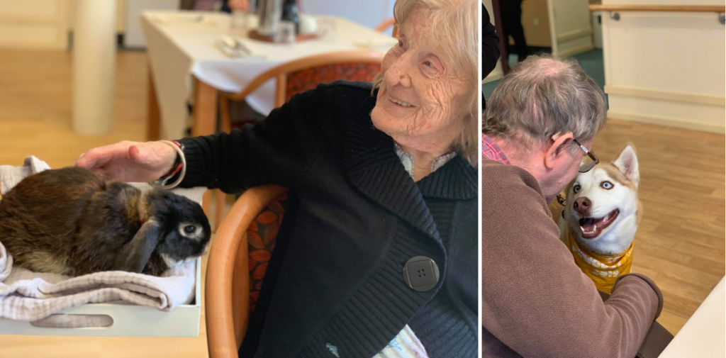Animal assisted therapy at Japara South Yarra care home: residents stroke huskies and rabbit